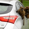 Hyundai-i30-Monkeys-1[2]